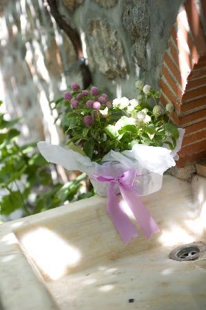 Pension Erofili: garden
