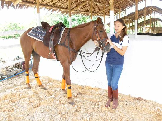 Casa Del Mar Golf, Polo & Beach Resort: horse in stable