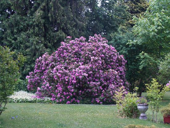 Cedar Wood Lodge Bed & Breakfast Inn & Conference Center: That big rhododendron!