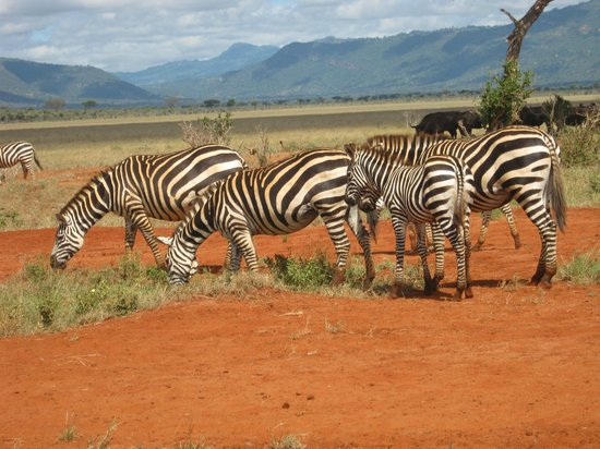 Safari Talk Day Tours