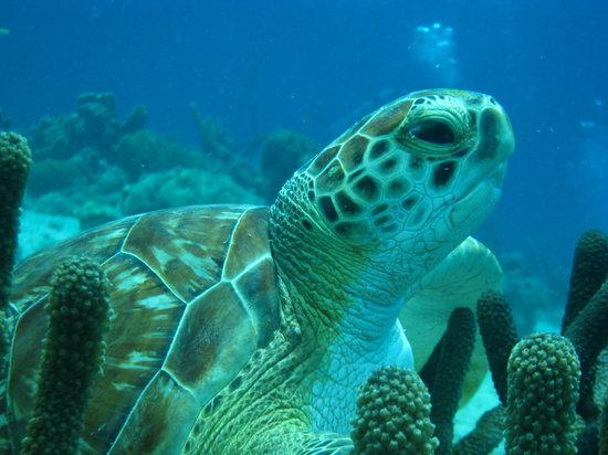 Happy Divers Aruba