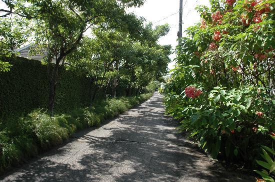 The Gardens Liguanea : The driveway