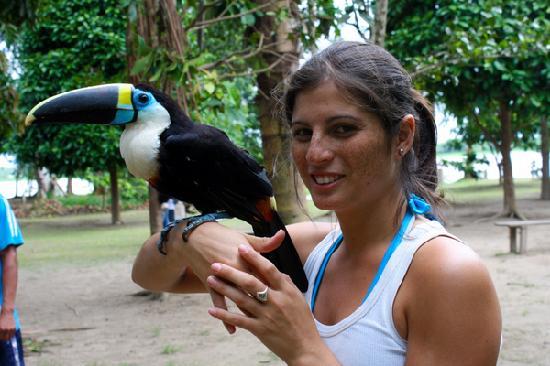 Amazon Reise Eco Lodge : Tucan Amazonico