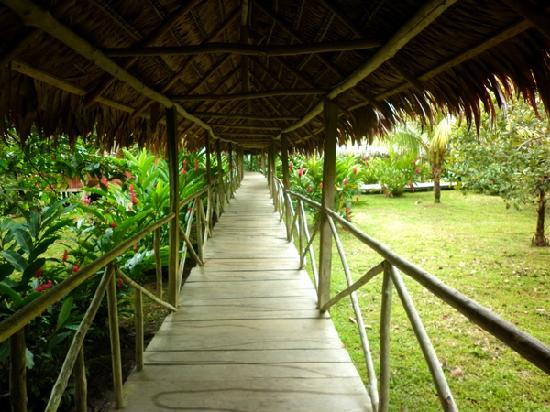 Amazon Reise Eco Lodge: Pasillos en el Lodge