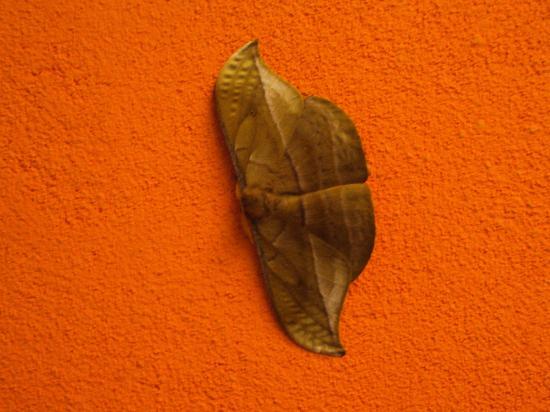 Obera, Argentina: 40.-Oberá-Tacuara Lodge: Mariposas
