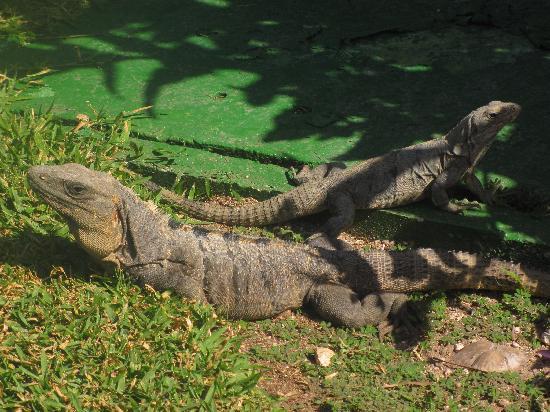 Grand Bahia Principe Tulum: Frequenti e piacevoli incontri nei giardini dell'hotel