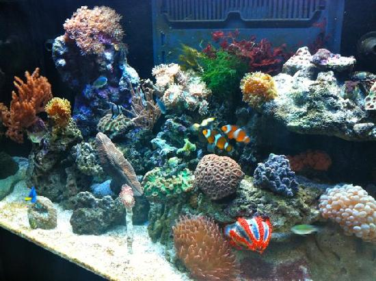 BIR - Belinda Indonesian Restaurant: BIR aquarium