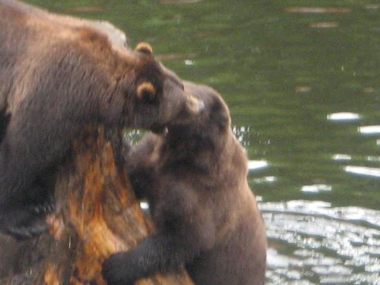 Sitka's Eagle Bay Inn: See our Alaskan Brown Bears