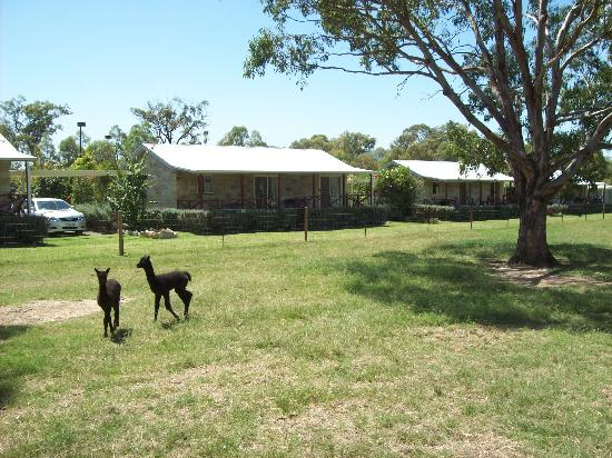 Starline Alpacas Farmstay Resort: Sandstone Family Cottages