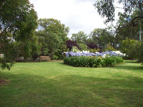 Starline Alpacas Farmstay Resort: Agapanthus garden
