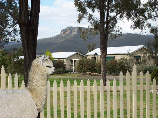 Starline Alpacas Farmstay Resort: Hmmmm