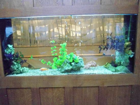 Fish tank in the wall picture of mandolay hotel for Fish hotel tank
