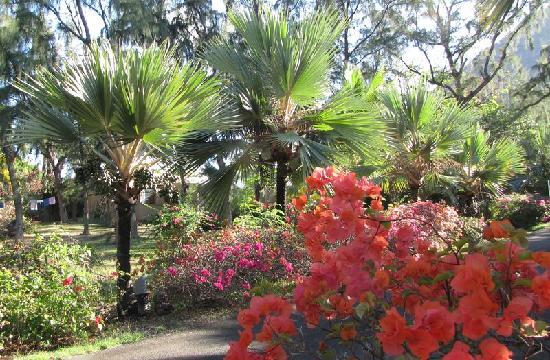 Les Lataniers Bleus côté jardin