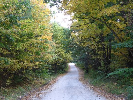 Nurture Through Nature Eco-cabin Rentals and Retreats: The road approaching Nurture Through Nature