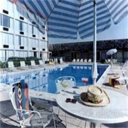 Quality Inn & Suites: Pool View