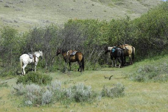 La Reata Ranch: In der Mittagspause