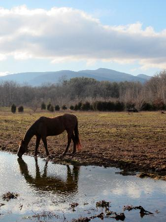 The Kaaterskill: Horse on the farm