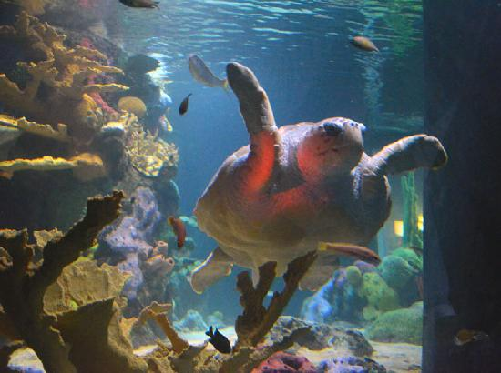 Vasco da Gama Shopping Center : Oceanario