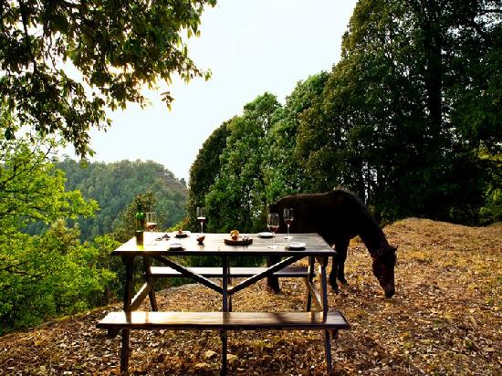 Binsar, Indien: Picnic Table