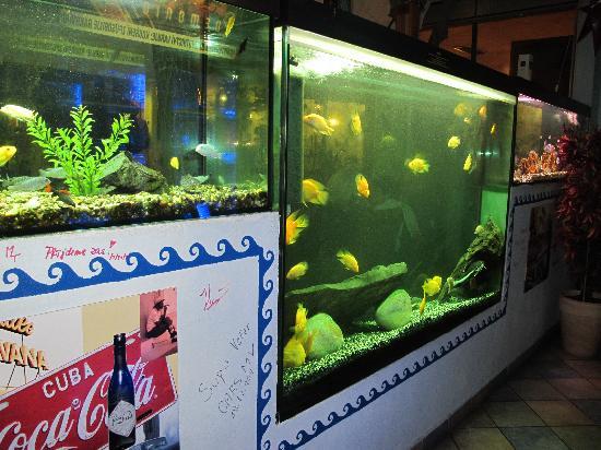 Havana Restaurant: gli acquari con i pesci tropicali