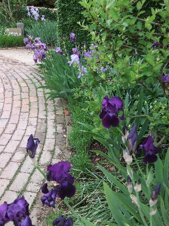 Hidcote Manor Garden: Iris were in full bloom