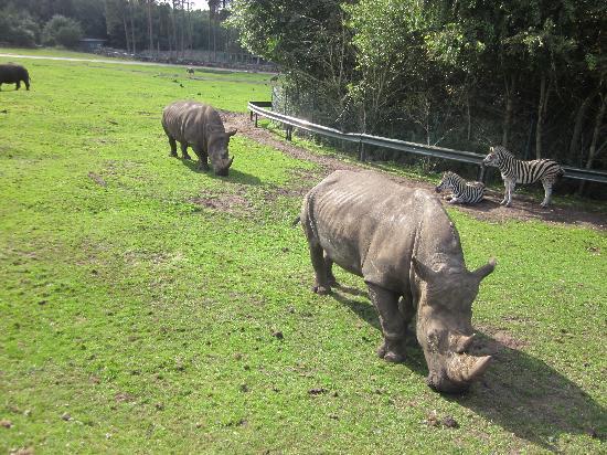 Serengeti-Park Hodenhagen: Wilde Tiere - hautnah.....