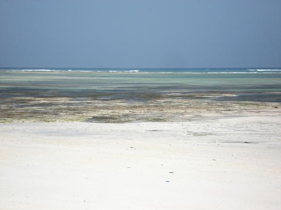 Melia Zanzibar: la plage à marée basse, barrière de corail au fond
