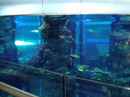 Aquarium In Center Of Mall Picture Of Morocco Mall