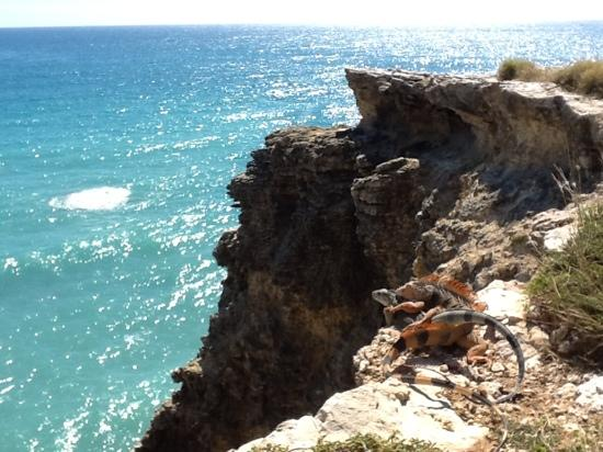 Playa Sucia: iguanas looking at the view