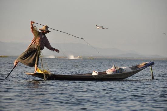 Nyaung Shwe, Myanmar: 漁の様子