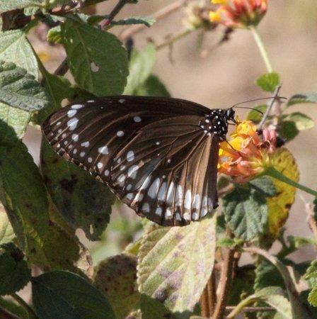 The Tiger Groove Corbett Resort: Butterfly in Resort