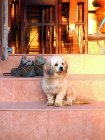 Popular View Guesthouse: Popular View's guard dog ;-)