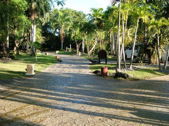 Bavaro Princess All Suites Resort, Spa & Casino : Jardin
