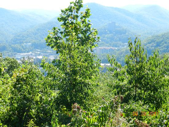 Gatlinburg Scenic Overlook: need some hedge trimmers and roundup