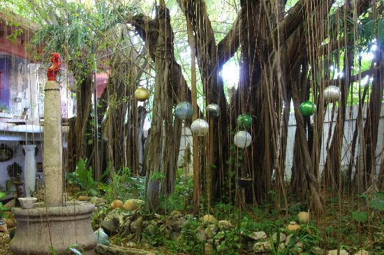 Hotel Trinidad Galeria: Huge tree on hotel grounds