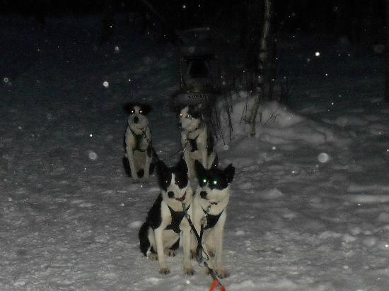Hotel Jussantupa: The Huskies