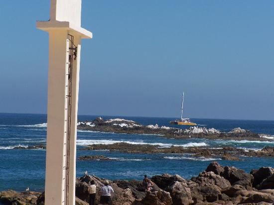 Chileno Beach : Lots of Marine Life to be seen just off the beach