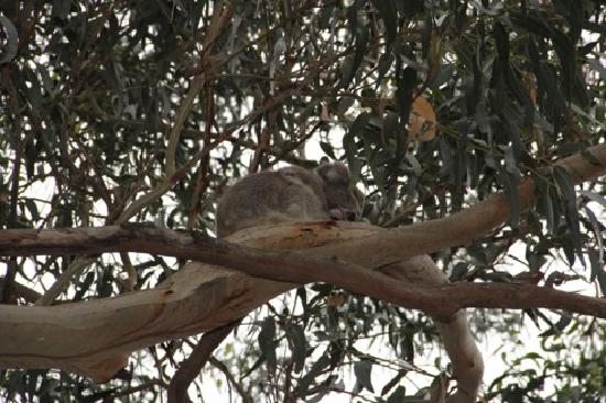 Hanson Bay Wildlife Sanctuary: Sleepy