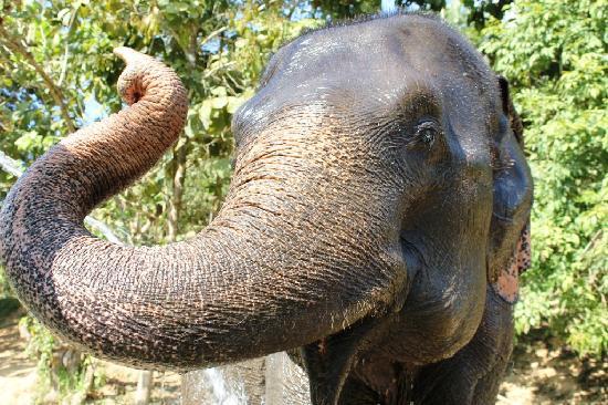 Boon Lott's Elephant Sanctuary : Lotus.