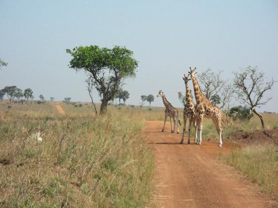 African Adventure Travellers 사진