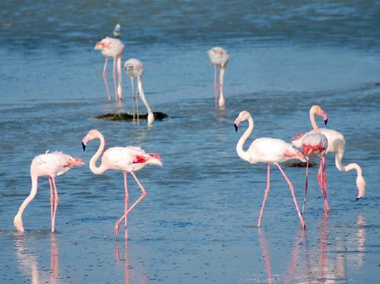 Остров Джерба, Тунис: djerbatourisme