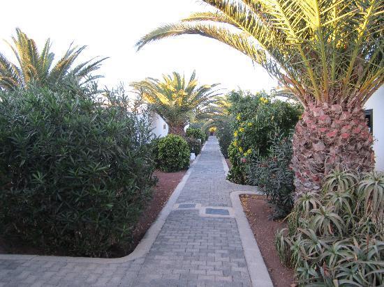 Hotel Río Playa Blanca: planted area