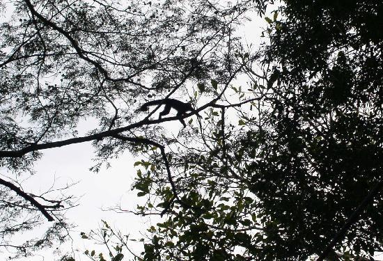 Isthmus Travel Panama : Gamboa Rainforest Resort - Aerial Tram