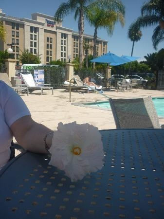 Holiday Inn Buena Park Hotel & Conference  Center: pretty flower found by pool