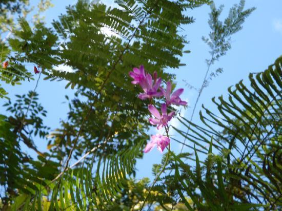 Parque Nacional Los Haitises: Natural walk trought the trails...