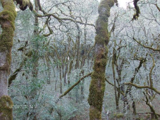 Bothe-Napa State Park: Moss forest!