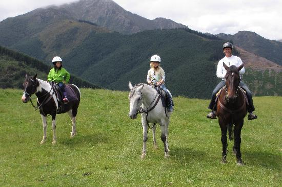 Hanmer Horses: Enjoying the view, up on the hill.