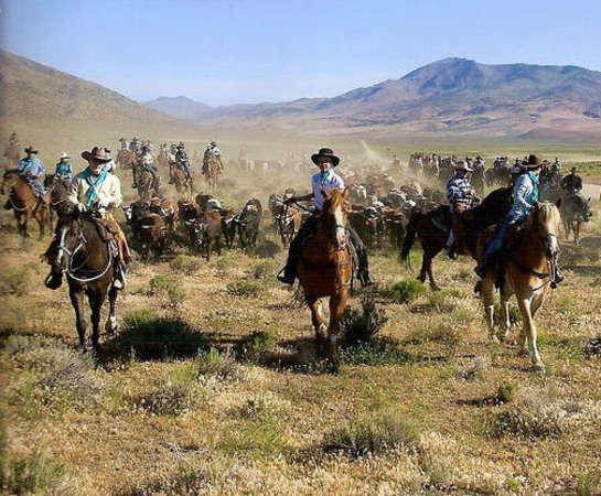 Reno Rodeo Cattle Drive Foto