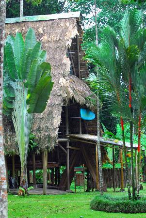 Casitas de Punta Uva : It's a jungle out there...