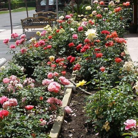 Garden Inn & Suites: Rose Garden